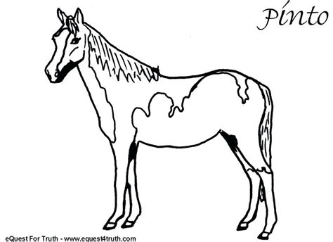 pinto horse coloring pages  getcoloringscom  printable colorings pages  print  color