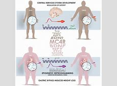 Sperm carries information about dad's weight