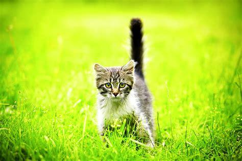Die Süßesten Katzenbilder