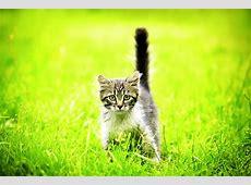 Katzen Bilder & Fotos die süßesten Katzenbilder