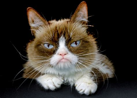 what of cat do i grumpy cat is joining broadway s cats nbc4i com