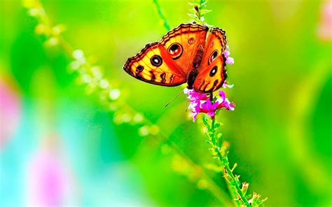 traduire bureau en anglais butterfly 06 colors of nature 13november2014