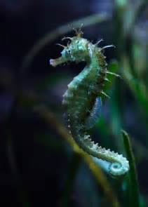Seahorse Photography