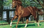 Image result for Free Picture OF Secretariat