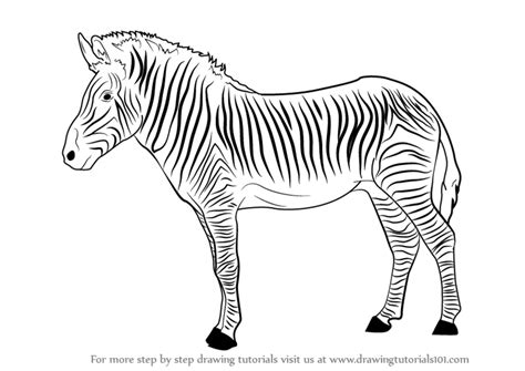 learn   draw  zebra zoo animals step  step
