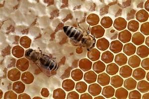Warum Machen Bienen Honig : deutscher honig bienen leben in ~ Whattoseeinmadrid.com Haus und Dekorationen