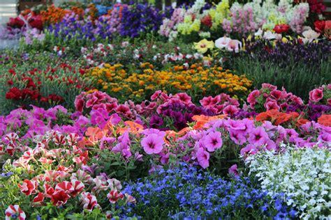 Vivai Piante E Fiori piante e fiori simboli e significati nella storia dell
