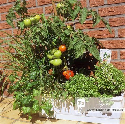 Tomaten Im Blumenkasten by Tomaten Und Kr 228 Uter In Balkonkasten Lizenzfreies Bild