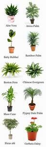 Zimmerpflanzen Arten Bilder Von Den Beliebtesten