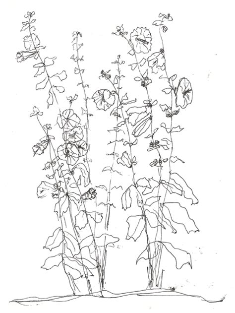hollyhock coloring pages coloring pages