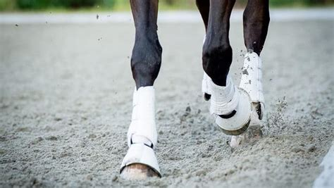 pferdeausruestung  checklisten fuer pferd reiter