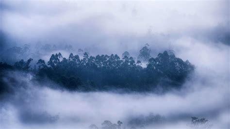 Munnar Mist Bing Wallpaper Download