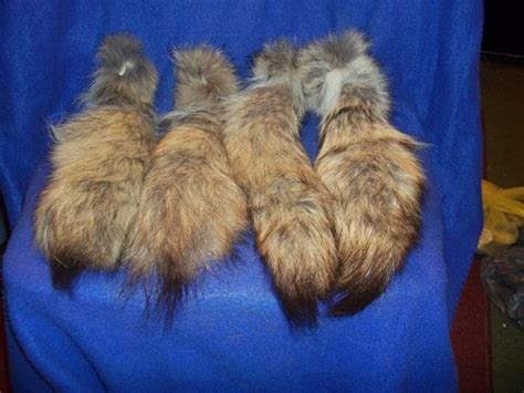 Real Large Coyote Skin Tail Animal Fur Taxidermy Craft Supply