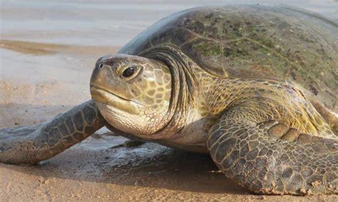 Vlorë, gjendet e ngordhur breshka gjigande e deti - Syri | Lajmi i fundit