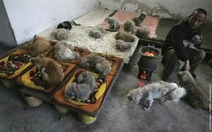 Animal Lover Dai Shuqing » GagDaily News