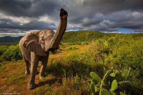 Spectacular South Africa Wildlife Photos