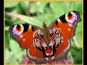 Bedeutung Schmetterling In Der Wohnung : schmetterling youtube ~ Watch28wear.com Haus und Dekorationen