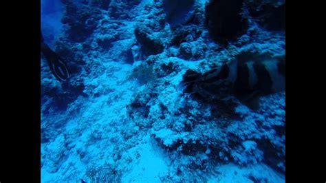 pet grouper lionfish