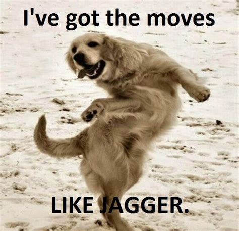 Dancing Dog Meme - moves like what funny pictures quotes pics photos images videos of really very cute animals
