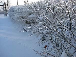 January 2009 North American Ice Storm