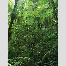 Jungle Britannicacom