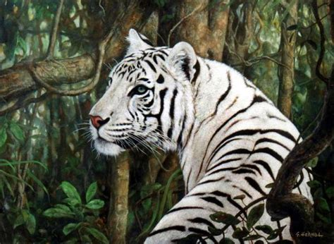 Encyclopedia Animal Facts Pictures White Tiger