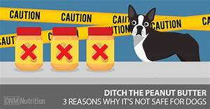 3 reasons peanut butter isnt safe for dogs or people