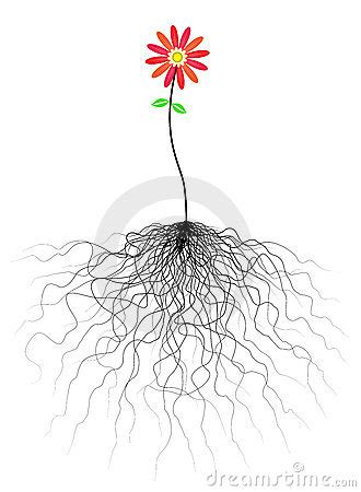 flower  roots royalty  stock photography image