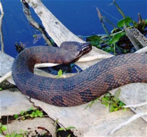 python shedding tips python page 8 pythons review