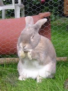 Rare Rabbit Breeds