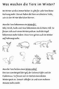 Was Machen Wespen Im Winter : schulmaterial arbeitsbl tter f r die unterstufe ~ Lizthompson.info Haus und Dekorationen