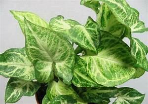 Grünpflanzen Für Dunkle Räume : zimmerpflanzen f r dunkle standorte geeignet ~ Michelbontemps.com Haus und Dekorationen