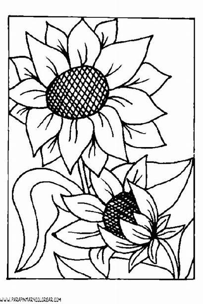Girasoles Dibujos Pintar Flores Colorear Girasoli Girasol