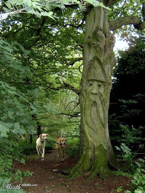 les 14 meilleures images 224 propos de tronc d arbre sur arbres decoration et bricolage