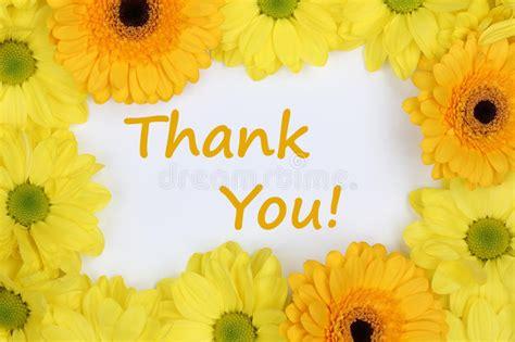 grazie dei fiori testo grazie con i crisantemi dei fiori immagine stock