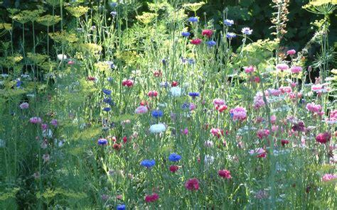 Cottage Garden Design by Cottage Garden Designer In Sussex Surrey Kent