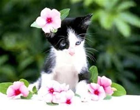 jeux gratuit cuisine fille chaton noir et blanc au milieu de fleurs