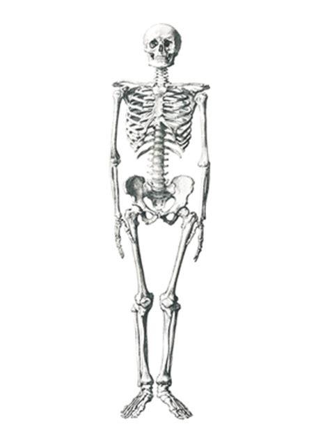 degenerative bone disease studycom