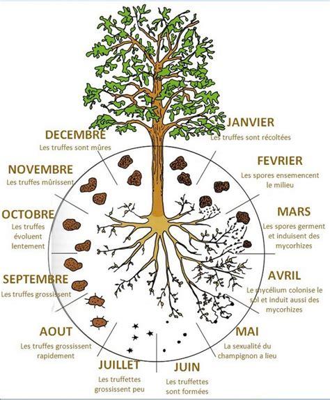comment cuisiner les truffes noires truffe fraîche et en conserve en direct du domaine