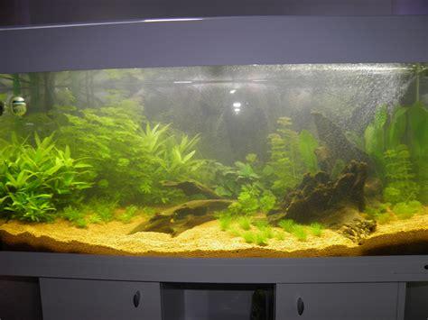 comment nettoyer un aquarium de poisson