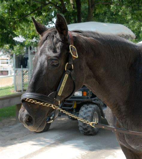mcanally remembers john henry horse racing news