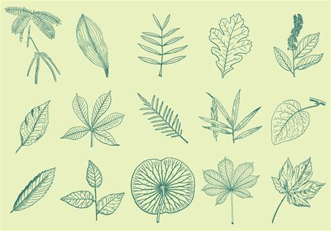 leaves drawings   vector art stock graphics