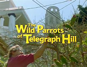 Parrots Of Telegraph Hill