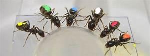 Was Mögen Ameisen Nicht : eine art der selbstkontrolle ameisen krabbeln zum gr eren futterst ck n ~ Orissabook.com Haus und Dekorationen