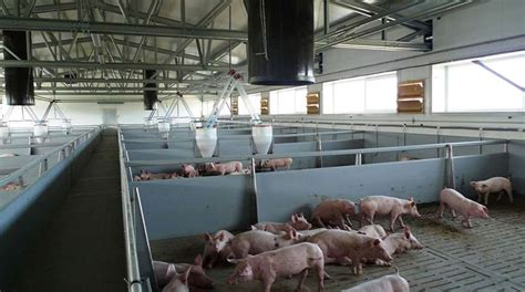 case study pig farm agricultural buildings frisomatcom