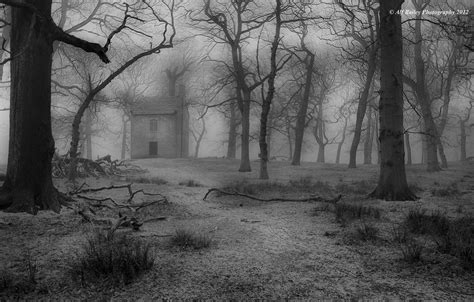 spooky wooded landscape photography google search