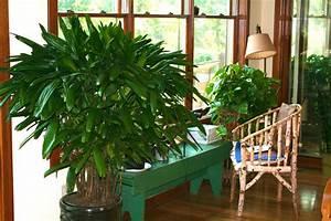 Houseplants, Make, You, Healthier