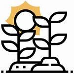 Solar Icon Vegetation Growth Farm Plant Agro