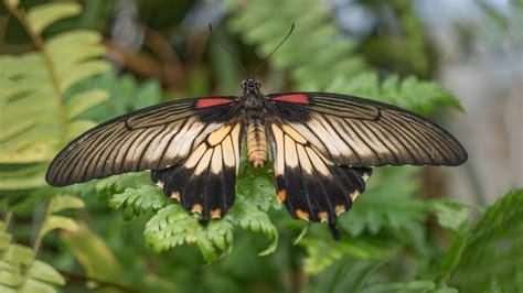 Botanischer Garten Augsburg Schmetterlinge 2017 by Helmut Rockenschaub Blumen Und Schmetterlinge Im