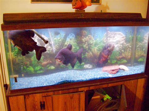 does a 10 gallon fish tank need an air 2017 fish tank maintenance